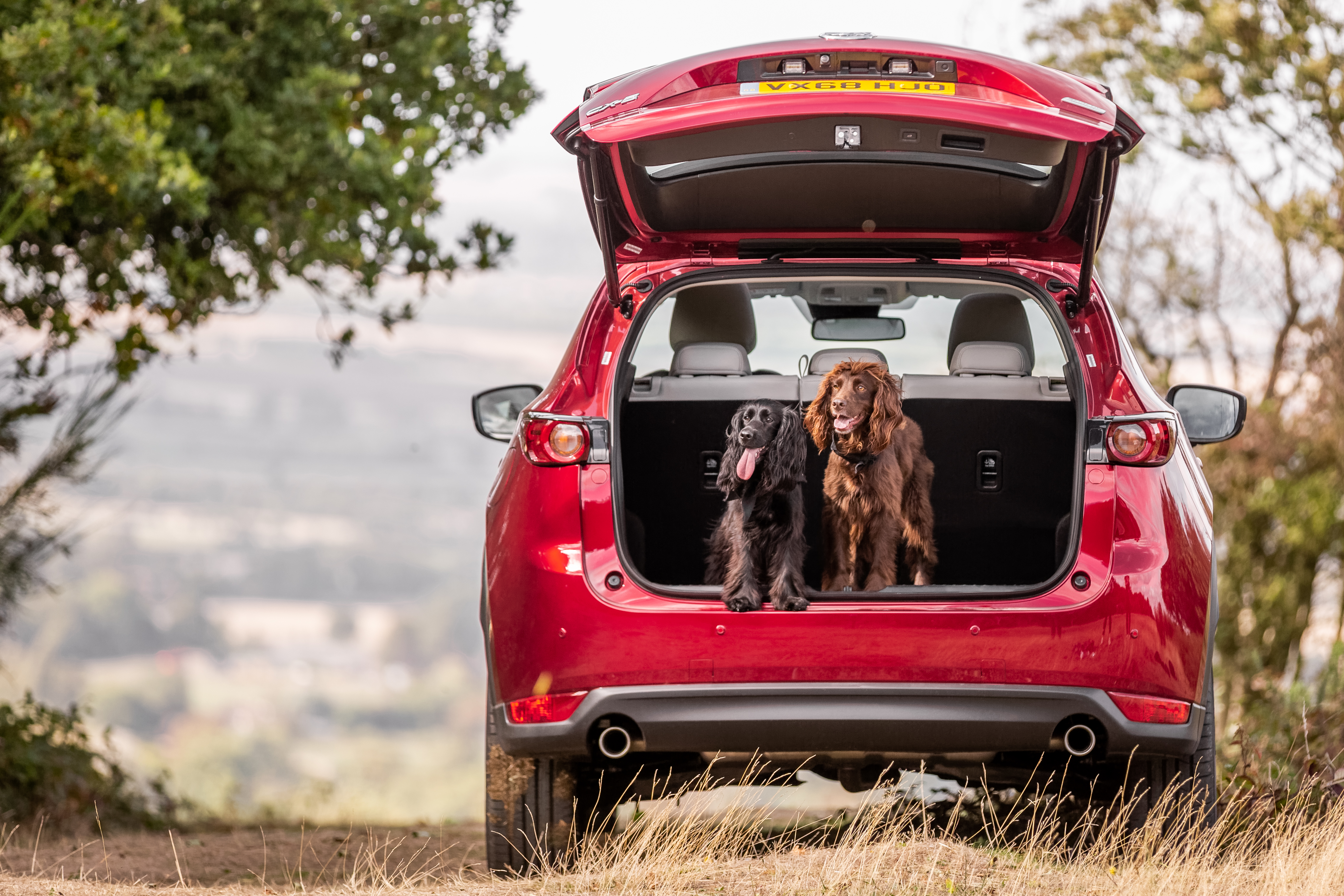 Mazda Takes Best Car For Dog Owners And Most Loved Car